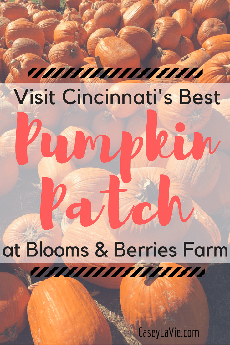 Blooms and Berries Farm Market is Cincinnati's best pumpkin patch. Visit for a perfect fall afternoon of pumpkin picking, fresh apple cider, corn mazes, farm animals and more!